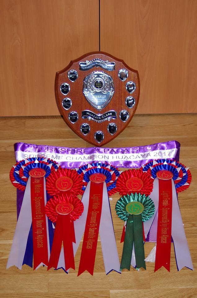 Yorkshire Alpaca Show