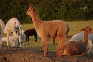 2018 Cria photos